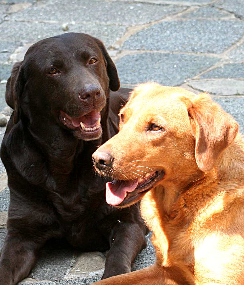 New evidence on the outcome of neutering dogs
