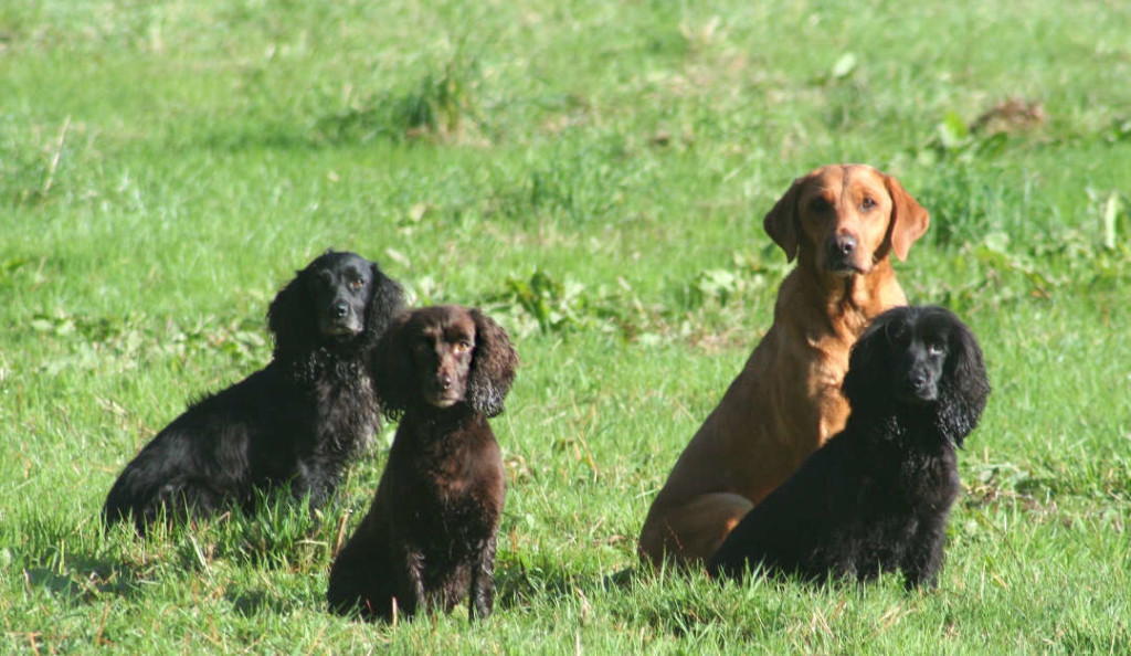 Positive Gundogs – a new approach to training